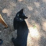 One of the vineyard cats, Noe. He was quite the lover. :)