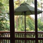 UTMT Underneath the Mango Tree Foto