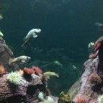 The beautiful aquarium at the zoo