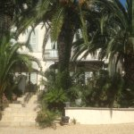 Les Palmiers Photo