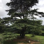 Beautiful giant tree, pictured in the garden