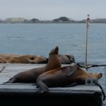 This was a barge full of sea lions that we rode right up to. They're such beautiful creatures.