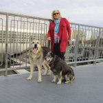 walking dogs in gardens , dogs allowed & a dog park on premesis