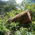 Faszinierender Dschungel