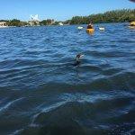 Foto di Almost Heaven Kayak Adventures