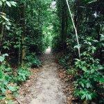 Billede af MacRitchie Nature Trail