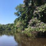 Foto de Anavilhanas Jungle Lodge