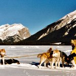 Connie with her sled dogs of Snowy Owl in the mountains above Canmore.