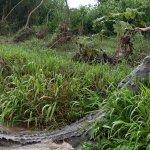Photo of Jose's Crocodile River Tour