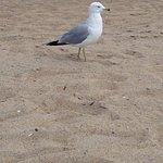 Foto Salisbury Beach