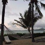 Photo of Tropical Attitude