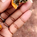 fresh passion fruit (from bushes)