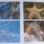 Seven Days Snorkeling Tours - Wildlife photo 1