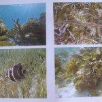 Seven Days Snorkeling Tours - Wildlife photo 2
