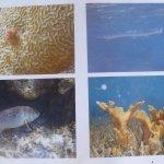 Seven Days Snorkeling Tours - Wildlife photo 3