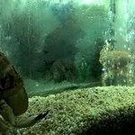 Aquário de mariscos