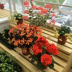 Colourful Greenhouse