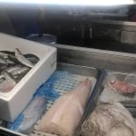 Montra de peixe fresco