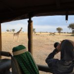 Snapping giraffes from the Land Cruiser