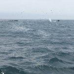 Photo de Central Coast Sailing Charters