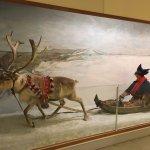 Display of Sami sleigh and Reindeer