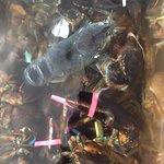 Menemsha Market Lobsters