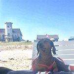 Foto di Dune Point