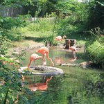 Flamingos out on a hot day