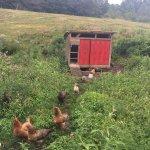 Photo de Stony Creek Farmstead
