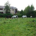 The Sheen Falls horses grazing nearby.