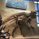 Sternberg hadrosaur at the Beneski museum