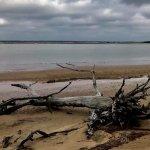 Photo de Cumberland Island National Seashore
