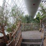 Foto di Myriad Botanical Gardens