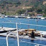 Photo of Sail San Diego