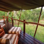 View from the tent into the bush