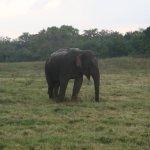 Photo of Minneriya National Park