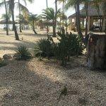 Foto van Manchebo Beach Resort & Spa