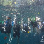 snorkeling in the open cenote