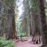 Big cedars