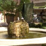 Les fontaines moussues ne sont pas l'apanage du cours MIRABEAU, celle-ci coule dans les jardins