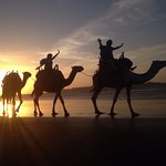 Camel safari before sunset (as arranged by the hotel)