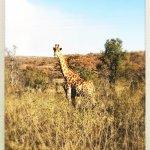 Photo de Makweti Safari Lodge