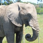 Photo of Knysna Elephant Park