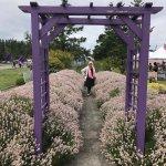 Sunshine Herb and Lavender Farm Foto