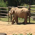Elephant on a walk.