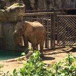 Elephant enjoying some water.