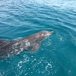 Photo of Dolphin Reef