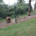 Bear Sanctuary- A happy ending for a lot of very sad stories for these bears