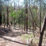 hochkins Ridge Flora Reserve