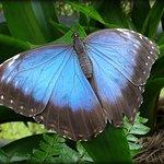 Im Schmetterlingshaus bewundet